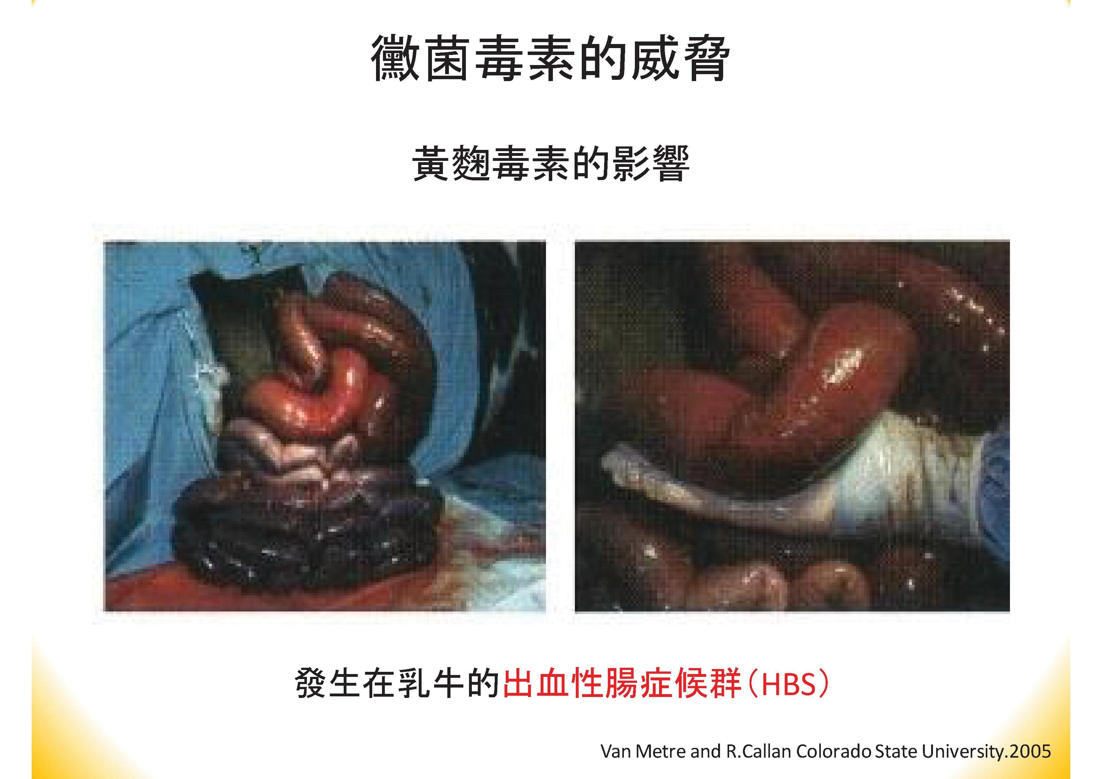 肝寶吸附劑簡報(中文).pdf00019